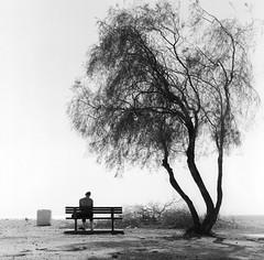 ... (johnny walker no label) Tags: bw streetphotography trees people mediumformat mamiyac220 film120 ilforddelta400