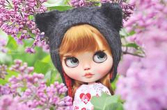 ... (AlexEdg) Tags: alexedg alledges 2019 blythe doll lilac flowers helios442