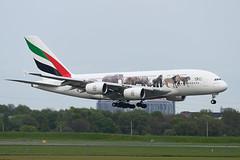A6-EOM Airbus A380-861 EGPF 06-05-19 (MarkP51) Tags: a6eom airbus a380861 a380 emiratesairlines ek uae unitedforwildlife specialcolours glasgow airport gla egpf aircraft airplane plane image markp51 nikon d500 nikond500 nikonafp70300fx