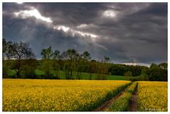 Giboulées de mai (Pascale_seg) Tags: landscape paysage campagne colza countryscape countryside champs nuages clouds averse éclaircie ciel sky printemps spring primavera jaune moselle lorraine grandest france nikon mai may