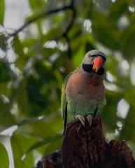 bird (sandilesmana28) Tags: sony a9 gm 400 28 tc 2x