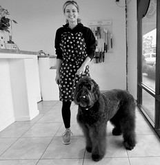 Benni and her new groomer (Bennilover) Tags: new groomer doggrooming k9krazy benni labradoodle groom grooming change missing salah lauren bennigirl