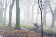 à la recherche du printemps / Looking for spring (cébé céline) Tags: parc brume printemps froid pluie banc glace arbres ice bench rain cold spring mist park montroyal montréal saison nature