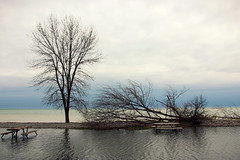 Day Use Picnic Grounds (Rokudan) Tags: lakeontario presquileprovincialpark flooding picnic grounds tables water highwaterlevels puddle pond trees lake cloudy overcast fallen spring