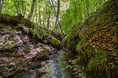 Parco dei Nebrodi (roberto_86) Tags: italia italy sicilia sicily parco dei nebrodi wood faggio bosco mangalaviti