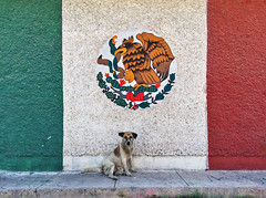(Vaquevan) Tags: torreón torreóncoahuila comarcalagunera méxico lalaguna torreónchido dog can perro mexico urban street calle perrocallejero coahuila repúblicamexicana laguneros laperladelalaguna