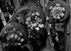 mull of galloway logan botanic garden-4131572 (E.........'s Diary) Tags: eddie ross olympus omd em5 mark ii spring 2019 botanic garden logan mull galloway