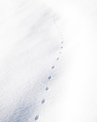 Dinosaur (LeonNikolai) Tags: bird day macro nature snow winter dinosaur footprint cold frezzing frezing freeze animal white space dots line depth buskerud drammen lines dot dotted distant blur isolated focus small print foot feat feet claws