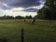 Sky and Horses 1-Edit (alnbbates) Tags: may2019 skywatch brokenarrow oklahoma horses topazstudio