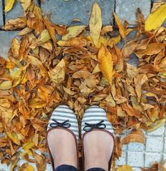 Retiro, Buenos Aires. (Ramona Anitsuga) Tags: leaves hojas autumn otoño pies feet retiro buenosaires argentina flats chatitas ballerinas