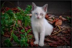 瓶覗... (SHADOWY HEAVEN Aya) Tags: 16080790a0139 北海道 hokkaido 日本 ファインダー越しの私の世界 写真好きな人と繋がりたい 写真撮ってる人と繋がりたい 写真の奏でる私の世界 写真で伝えたい私の世界 coregraphy japan tokyocameraclub igers igersjp phosjapan picsjp cat kitten animal animals straycat 猫 子猫 野良猫 ノラネコ ねこ ネコ ブルーアイ 白殺し