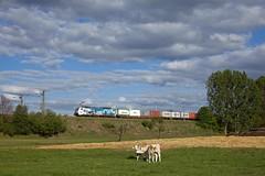 Metrans 386 020 + Güterzug/goederentrein/freight train   - Potsdam Wildpark West (Rene_Potsdam) Tags: potsdamwildparkwest metrans br186 brandenburg deutschland europe europa treinen trains trenes züge railroad werbelok
