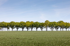 Between Earth and Sky (Helmuth of Boskone) Tags: may field morning spring northampton england unitedkingdom trees