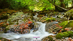 The Shimna river in Tollymore forest park (Photographs and Images of Northern Ireland) Tags: tollymore forest park walks red squirell deer waterfalls shimna caravans parking mourne mountains newcastle sunsets cascades hermits lodge