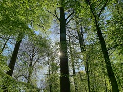 Jette-Laarbeekbos-forest #3 (foto_morgana) Tags: aurorahdr2019 forest foret on1photoraw2019 trees jette laarbeekbos brussel belgium belgique belgië nature explore