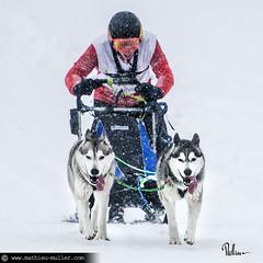 15h40 (Mathieu Muller) Tags: course race dogs chiens traîneau mush musher sled neige snow winter hiver mathieumuller wwwmathieumullercom