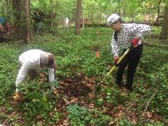 Piney Branch Planting (RockCreekConservancy) Tags: rock creek conservancy rockcreekpark rockcreekconservancy pineybranch treeplanting washingtondc dc native plants