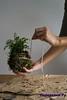 Кокедама своими руками, Фото и Видео с мастер классами
