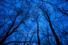 Tangled with Blue (Josh152) Tags: trees blue nikon d800 nature silhouette lakeviewcemetery nikond800 afsnikkor2485mmf3545gedvr