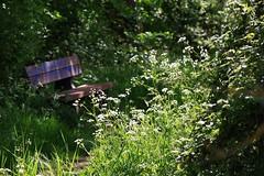 Fuie des Vignes (Tonton Gilles) Tags: banc fuie des vignes végétation hautes herbes fleurs ombelles ombres chemin premier plan paysage