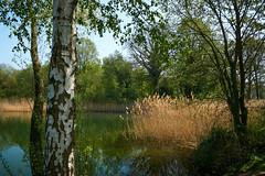 Winterswijk (Jos Mecklenfeld) Tags: sonya6000 sonyilce6000 sonyepz1650mm selp1650 achterhoek spring frühling lente niederlande nederland thilgelo lake see meer landscape landschaft landschap winterswijk gelderland netherlands