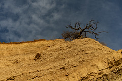Betrayer's Tree (George Tzanis) Tags: tree edge cliff sky soil land branches baretree clouds betrayer judas hang hanging dramatic landscape nature yellow blue brown colors colours tone sony sonya7ii ilce7m2 a7ii a7m2 canon canonfd50mmf14 aggelochori greece ελλάδα μακεδονία makedonia macedonia