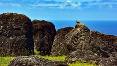 Birdman Cult petroglyphs, Orongo, Easter Island (David D Moore) Tags: easterisland rapanui isladepascua moai ahutongariki ranoraraku anakena ahuakivi theseven birdmancult birdman birdmen orongo ahutahai koteriku tahai vaiure ranokau polynesia chile