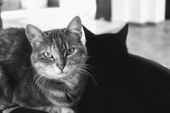 Eyes (alyna16) Tags: cat kitten cats blackandwhite nature animal cute