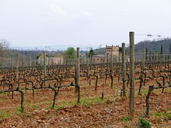 vineyard (ekelly80) Tags: italy tuscany april2019 spring countryside hills montepulciano cantinedei vineyard winery vines view grapes stone houses