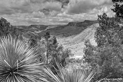 Salt River Canyon (walkerross42) Tags: saltriver canyon arizona yucca desert trees pines landscape blackandwhite monochrome
