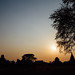 Sunset Silhouette, Bagan Myanmar