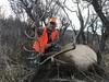 Colorado Elk Hunt and Mule Deer Hunt - Meeker 14