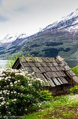 Hardanger 2019-1 (FotoRoar2013) Tags: fotoroar2013 2019 canon 5dmk3 norway norwegen noruega norge norvegia norwege norvege nature natur blomst fjord farger frukt blomstring atmosfære atmosphere atmosfera mountain spring