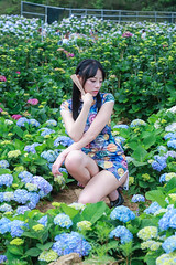 IMG_1805L (攝影玩家-明晏) Tags: 繡球花 人 人像 戶外 outdoor 美女 辣妹 model 外拍 旗袍 pretty people taiwan taipei portrait flower 花 高家繡球花