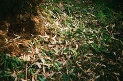 Dead leaves on the ground (Matthew Paul Argall) Tags: kalimarspiritf fixedfocus focusfree 35mmfilm plasticlens toycamera leaves kodakultramax400 kodak400 ultramax 400isofilm