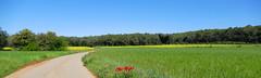 PLA DE L'ESTANY (Joan Biarnés) Tags: pladelestany girona paisatge paisaje 314 panasonicfz1000