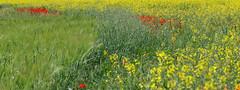 PLA DE MARTÍS (Joan Biarnés) Tags: pladelestany girona paisatge paisaje 314 panasonicfz1000 plademartís