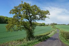 dreaming of England (SCRIBE photography) Tags: uk england hampshire countryside country landscape road bend bends sbend winding curves tree trees spring sky clouds track lane hedgerow field crops lines leadinglines farm hills