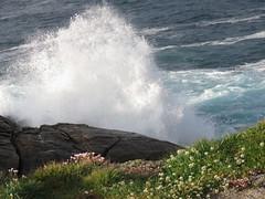 IMG_7386 (jesust793) Tags: mar sea flores flowers olas waves