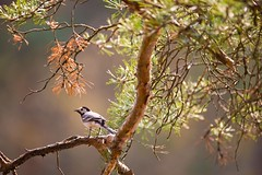 IMG_4545 (hippy_old) Tags: forest russia animal bird tree