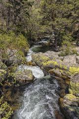 Sortendo piedras (1) (lebeauserge.es) Tags: rascafría madrid españa naturaleza árbol río agua catarata cascada