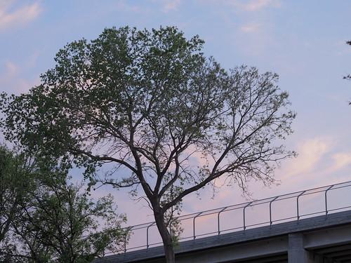 Tree next to bridge
