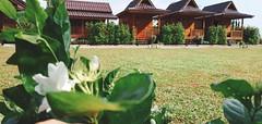 Imsuk Homestay Chiang Rai, Chiang Rai: mulai Rp 245,000* / malam (VLITORG) Tags: homestay di chiang rai