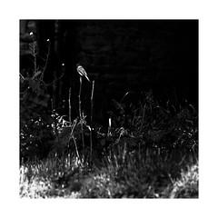 Sun Kissed, Too... (roylee21918) Tags: harford maryland bird monochrome blackwhite eden mill dxo photolab