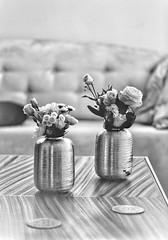 Elegant Flowers (59) (Polis Poliviou) Tags: naturepics naturephotography environment relax relaxing calming cyprus life living enjoyable colour colourful mediterranean travel beautyinnature rural countryside agricultural winter flowers plant floral flora winterblossom botany bulbs green white wallpaper herbs cyprustheallyearroundisland cyprusinyourheart flowerarrangement zypern republicofcyprus κύπροσ кипър chypre ©polispoliviou2019 polispoliviou polis poliviou πολυσ πολυβιου flowerbulb flowerbulbs ranunculus petals garden gardening gardeners vase colors spring yellow arrangement elegant