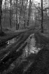 The muddy way (lumpy79) Tags: praktica mtl5 helios44m 258 ilford hp5 400 1600 blackandwhite bw forest feketefehér