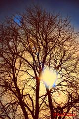 Tree flare (red.richard) Tags: tree flare park sun silhouette nikon d800