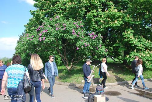 Київ, Ботанічний сад імені Гришка  Цвіте бузок InterNetri Ukraine 09