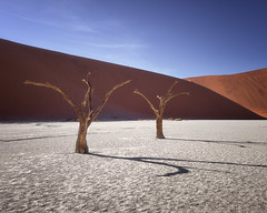 Dead Acacia Trees of Deadvlei in Namib-Naukluft Park, Namibia (ansharphoto) Tags: acacia africa african arid beautiful blue branch camelthorn clay day daylight dead deadvlei desert drought dry dune famous forest hot lake landmark landscape morning namib namibia namibian national nature naukluft orange outdoor pan park red sand scenery shadow sky sossusvlei sunlight tourism travel tree view vlei white wild wilderness wood