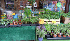 May 17th, 2019 - Oh dear, temptation at Homecrafts in Caversham (karenblakeman) Tags: caversham uk homecrafts shop plants chillis peppers runnerbeans tomatoes courgettes vegetables may 2019 2019pad reading berkshire
